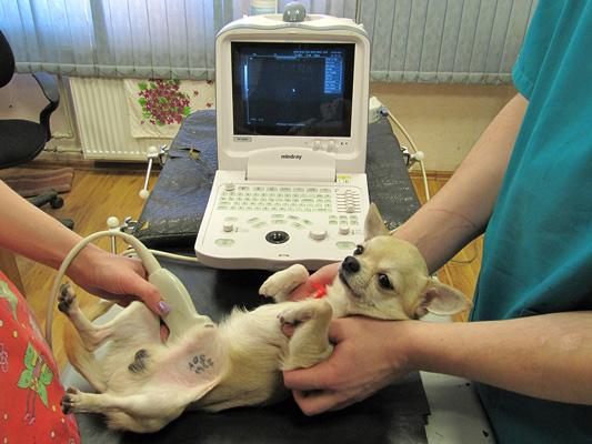 ветеринарный диетолог